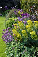A tough border in late spring planted with Allium' Purplke Sensation', Euphorbia characias subsp. wulfenii, Erysimum 'Bowels Mauve', Self-seeded Aquilegia vulgaris, purple hazel with evergreen yew and box.