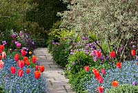 Colourful spring borders with orange red Tulipa 'Annie Schilder' and 'Dordogne' underplanted with forget-me-nots, then pink Tulipa 'Barcelona'. In the distance, Tulipa 'Violet Beauty' and 'Negrita'. Great Dixter.