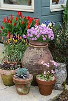 A group of terracotta containers with echeveria, tulipa, viola, hyacinthus, armeria and Primula 'Johanna'