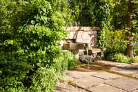 Sandstone wall with fountain and bench, rill, Corydalis ochroleuca, Hydrangea petiolaris. Herrenm�hle Bleichheim
