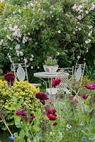 A border of annual poppies and cornflowers in front of a table and chairs with lavender bowl,  In the background - Rosa 'Adelaide d'Orleans', 'Frances E Lester'.