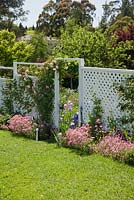 English cottage style garden with white lattice screen divider and pink climbing Rosa