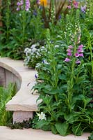 Detail of a curved sandstone garden wall. Garden planted with Digitalis purpurea and Aquilegia vulgaris