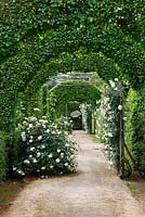 Hornbeam arches with trained roses 'Madame Alfred Carriere' at le Prieur� Notre-Dame d'Orsan