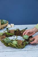Succulent Wreath. Plant the Succulents in the moss bedding