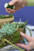 Succulent Wreath. Use the florist wire to secure the Moss and Succulent planting to the wreath frame