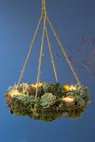 A Succulent hanging wreath, planted with a variety of Succulents, Moss and Candles
