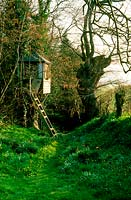 Ladder leading to childs treehouse. Lesley Rosser's garden. Gloucestershire