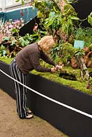 Last minute preparations on a stand in the Grand Pavilion. Chelsea Flower Show 2006
