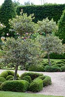 Variegated holly trees with unusual topiary underplanting, June.