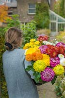 Woman carrying bunch of mixed Chrysanthemums.