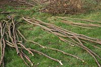 Different bundles of Hazel sticks organised for use as Pea sticks, Stakes, Hazel canes, Craft wood and Bean sticks
