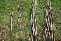 Bundles of Hazel sticks organised for use as Pea sticks, Stakes, Hazel canes, Craft wood and Bean sticks