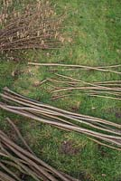 Bundles of Hazel sticks organised for use as Pea sticks, Stakes, Hazel canes and Craft wood