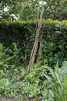 Hazel Teepee. Materials required are Hazel sticks and Willow sticks, which should measure between 8-10 foot in length