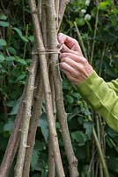 Hazel Teepee. Secure the Hazel sticks together with string, roughly 1 foot from the top of the Teepee