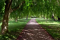 Path through dappled shade of weeping Beech tree creating archway with Fagus Sylvatica Pendula in spring time at Shugborough park and landscaped gardens in May, Great Haywood, Staffordshire