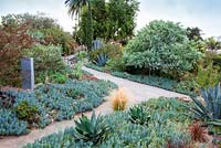 View of path winding through mixed borders containing succulents and cactus. Debora Carl's garden, Encinitas, California, USA. August.