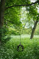 Childs swing in woodland