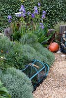 Seaside themed garden detail with buoy, lobster pot, iris pallida, santolina, gravel, driftwood, shells, ornaments and an euonymus hedge.