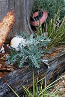 Seaside beach themed garden detail with buoy, carex, gravel, driftwood, shells, ornaments, artemisia and metal artefacts.