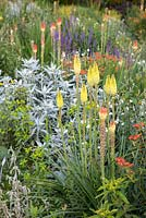 Detail of the Kniphofia border at Weihenstephan Gardens