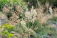 Detail of the Iris borders at Weihenstephan Gardens in Summer - plants are Euphorbia seguieriana subsp. seguieriana, Stipa gigantea and Yucca filamentosa 'Glockenriese'
