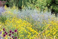 Detail of a steppe planting with Allium sphaerocephalon, Anthemis tinctoria and Eryngium planum 'Blaukappe'