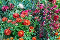 Detail of a colour schemed mixed border with Penstemon and Zinnia