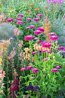 Detail of a colour schemed annual border with Antirrhinum, Tithonia rotundifolia and Zinnia