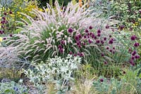 Detail of steppe planting with Allium sphaerocephalon, Eryngium giganteum and Pennisetum orientale