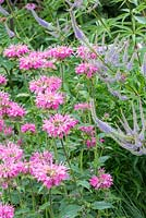 Detail of a perennial border with Monarda 'Marshall's Delight' and Veronicastrum virginicum 'Fascination'