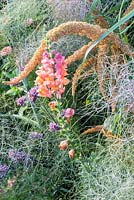 Detail of a colour schemed annual border with Amaranthus caudatus, Antirrhinum, Foeniculum vulgare 'Rubrum', Verbena bonariensis