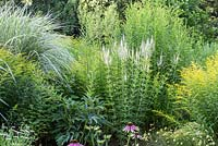 Detail of a mixed border with Miscanthus sinensis 'Variegatus', Solidago and Veronicastrum virginicum 'Diana'