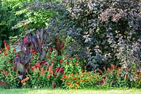 Detail of a colour schemed border with Canna indica, Physocarpus opulifolius 'Diabolo' and Zinnia