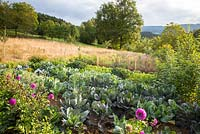 Rural garden with vegetables and flowers embedded in natural landscape. Salads, red cabbage, Dahlia, Helianthus annus, Helianthus tuberosus and Tithenia rotundifolia
