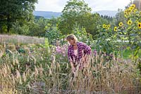 Katrin Schumann working her small acre with flowers and vegetables embedded in the landscape of the Bavarian Forest. Plants are barley, Cosmos and Helianthus annus - sunflowers