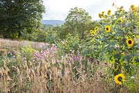 Small acre with flowers and vegetables embedded in the landscape of the Bavarian Forest. Plants are barley, Cosmos and Helianthus annus