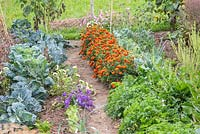Detail of a small vegetable garden. Plants are Brussel sprouts, parsley, salads, Tagetes, Callstephus chinensis