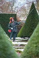 Portrait of Chris Crowder, Head Gardener at Levens Hall, Cumbria shaping yew with strimmer.