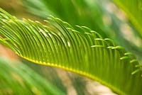 Palm leaf. Ben De Lisi House and Garden, London