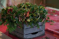 Christmas wreath making workshop. Wreath features Hedera - Ivy, red sprayed fir cones, dried apples, Pinus - Christmas tree twigs, red twigs, Cinnamon sticks and red fairy lights. December, St Francis Cottage