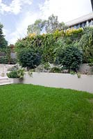 Lush green, Bouteloua dactyloides, Buffalo grass lawn in front of a raised garden and vertical garden.