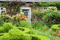 Oriental poppies make a bright splash of colour in the predominantly green front garden shaped by a clipped box parterre.