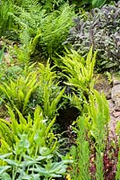 Stream running through the garden is edged with ferns and purple sage.