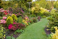 Rhododendrons and azaleas brighten a gently sloping hillside mixed border featuring a range of  plants, including Alchemilla mollis, Euonymus fortunei, Sedums and Fatsia japonica, at Mount Pleasant Gardens, Kelsall, Cheshire in June.