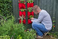 Man cutting Oregano from vertical planter