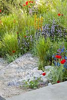 Hordeum vulgare, Asphodeline lutea, Salvia 'Madeline', Anchusa azurea dropmore, Adonis annua 'Scarlet Chalice', Papaver rhoeas. The RHS Chelsea Flower Show 2016. Designer: Hugo Bugg - Sponsor: The Royal Bank of Canada