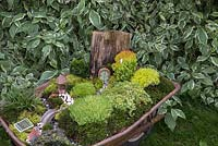 Miniature Wheelbarrow Garden. A miniature garden inside a wheelbarrow made with Moss, Conifers, decorative stones, seashells, animal and structural figurines