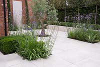 Sandstone patio featuring sunken planting of an established Olive tree, Verbena bonariensis, Veronica, Agapanthus and Taxus cubes